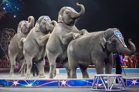 Ringling Bros. circus comes to an end after years of animal cruelty
