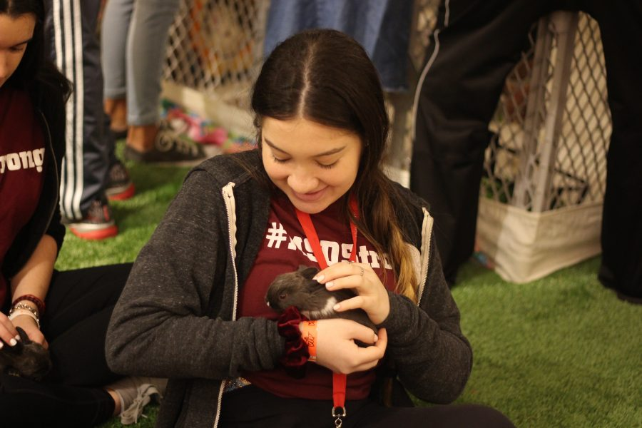 "Comforting Cuddles. Junior Emily Wolfman plays with a micro-bunny on Feb. 14, 2019 at the Coral Springs Museum of Art. ""I'm usually not an animal person at all. As soon as you get [the bunny] in your hands, all you are thinking about is how cute and little it is,"" Wolman said. ""It helped me to forget about everything, even if just for 30 seconds."" Photo by Dara Rosen"