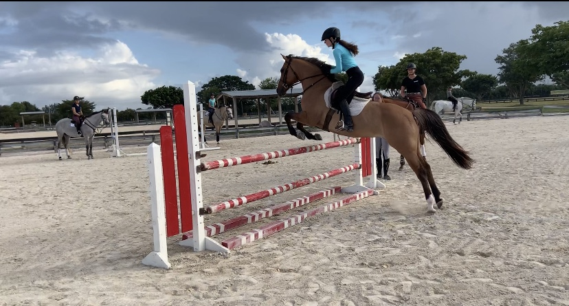 Horse rider Samantha Goldblum leaps over obstacle on her horse. Photo courtesy of   Samantha Goldblum