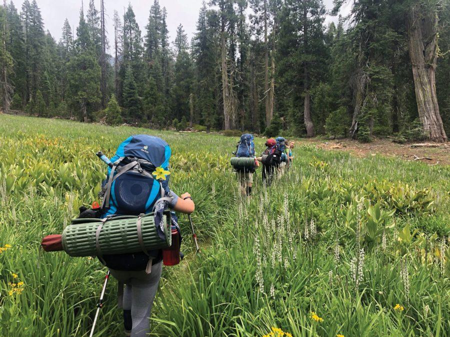 Take a Hike. Junior Anna Crean and her peers from her Adventure Trek Tour walk through a fireld of tall grass in Trinity National Forest. Photo courtesy of Anna Crean