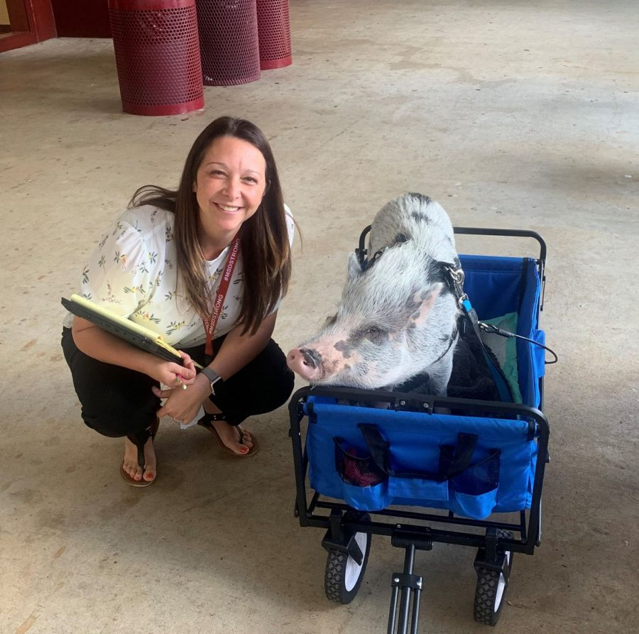 Rachel Kusher, one of MSD's many school counselors, posing with a pig.