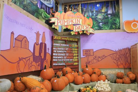 In the corner of Trader Joes off University Drive sits a ton of pumpkins to choose from. Pumpkin picking has been a fall tradition in many local stores for several years.