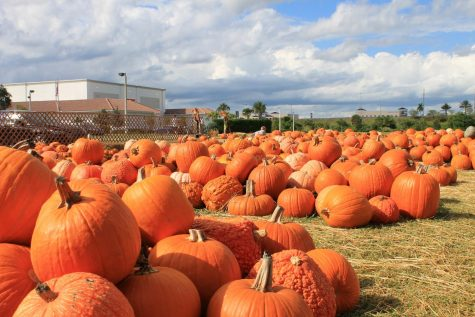 Off Coral Ridge Drive you will find bright orange pumpkins piled outside Parkridge Church. The large variety of pumpkins have continued to sell to eager fall-spirited customers.